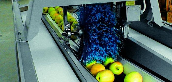 O sătmăreancă face o fabrică de procesare fructe în Zalău