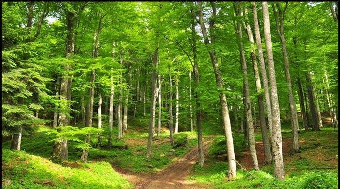 """O sătmăreancă printre câștigătorii concursului """"Cel mai frumos gând pentru pădure"""""""