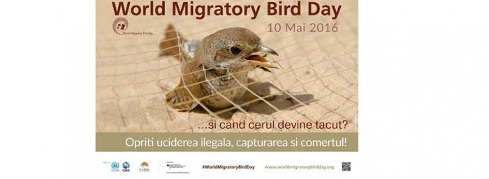 """""""Ziua Mondială a Păsărilor Migratoare"""", marcată la Satu Mare"""