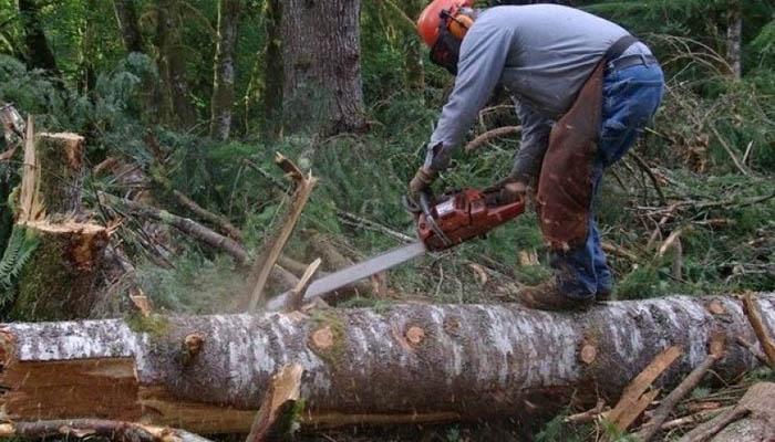 Sute de cazuri de tăieri ilegale de arbori în județul Satu Mare