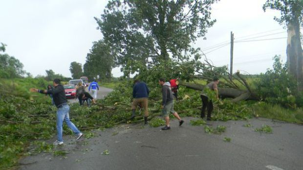 Copac prăbușit pe drumul dintre Botiz și Ciuperceni