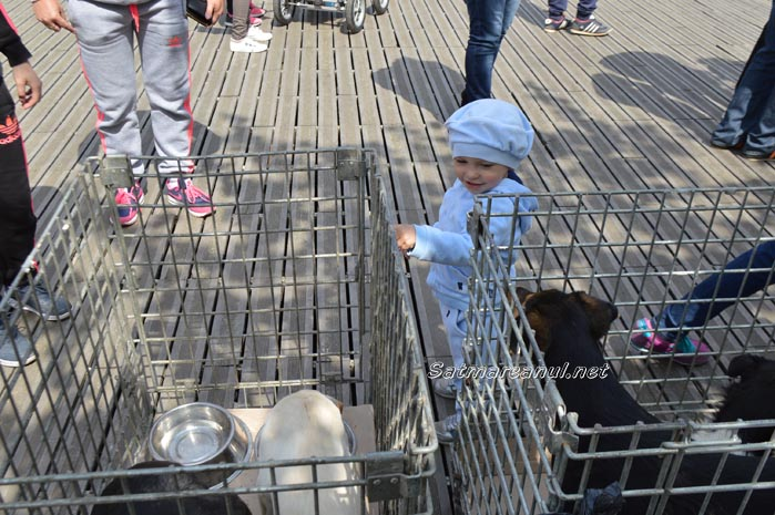 Târg de adopții de câini la Satu Mare