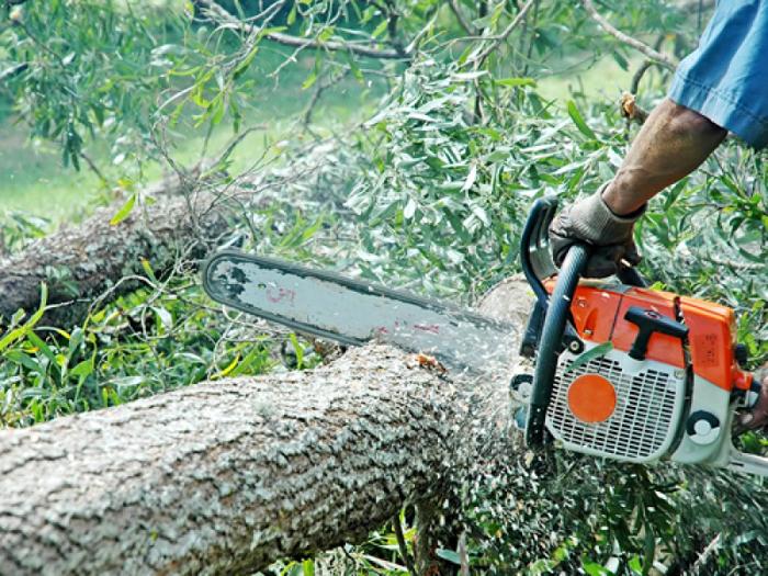 Tăierile ilegale de arbori pot fi sesizate pe o platformă lansată de Greenpeace România