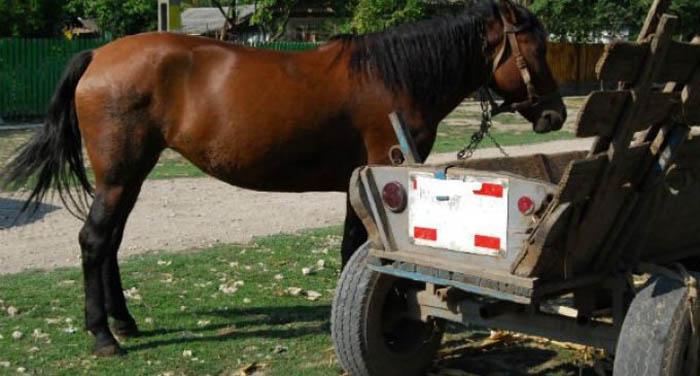 Au furat căruța cu cal cu tot