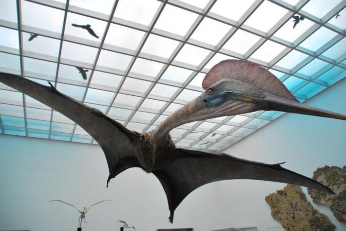 Cel mai mare dinozaur din lume, va fi expus la Muzeul Antipa (Video)
