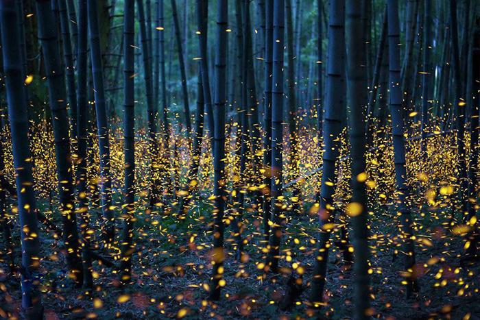 Imagini de vis cu mii de licurici (Galerie foto)
