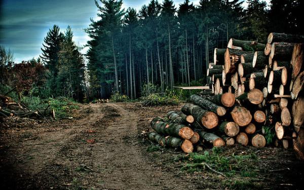Pădurile, protejate cu sisteme video