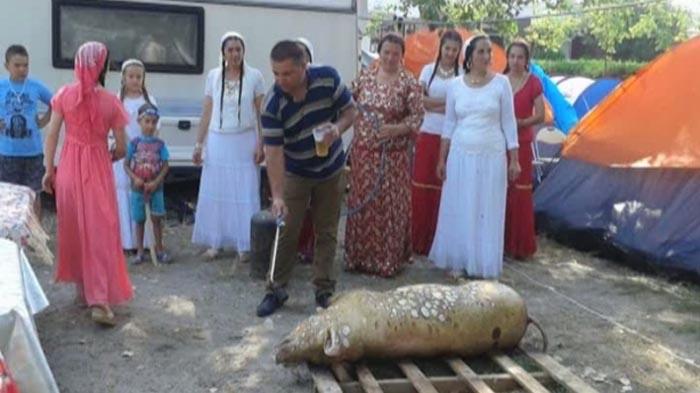 Șoc pe litoral: Au tăiat porcul pe plajă