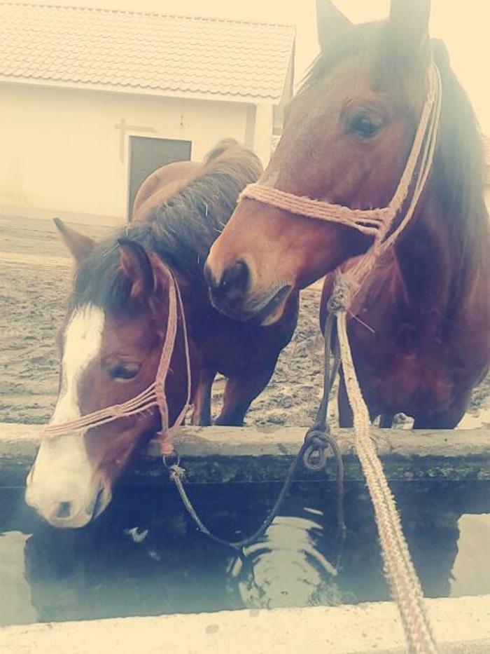 Hoți de cai, căutați pe Facebook