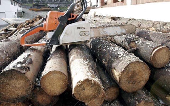 A furat lemne din pădure