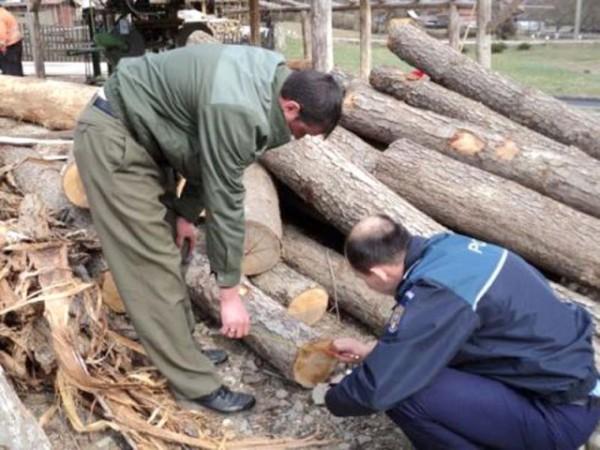 """Pădurarii """"uituci"""", puși să plătească lemnele furate"""