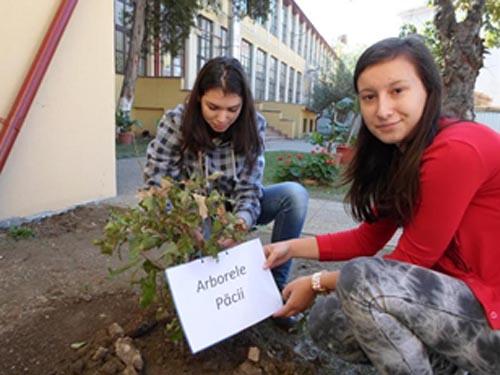 """Elevii de Slavici au plantat """"Arborele Păcii"""" în curtea școlii"""