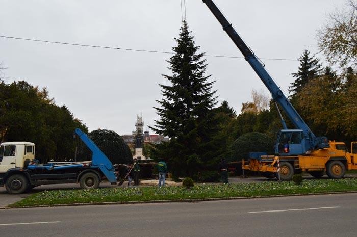 A început amplasarea brazilor de Crăciun în municipiul Satu Mare