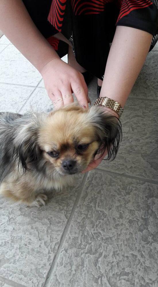 Câine rătăcit în zona 14 Mai. Hai să-i găsim stăpânul (Foto)