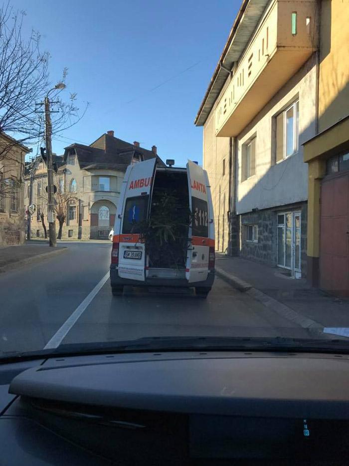 Ambulanța Satu Mare cară brazi (Foto&video)