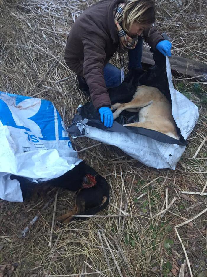 Cadavre aruncate la marginea municipiului Satu Mare. Vezi detalii (Foto)