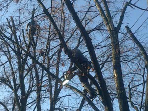 Prinși în timp ce tăiau pomi fructiferi dintr-o livadă