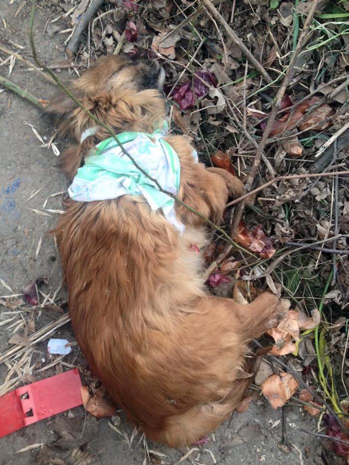 Cățeluș aruncat la gunoi. Imagini șocante
