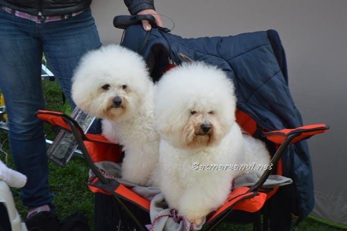 Show canin, în week-end, la Satu Mare