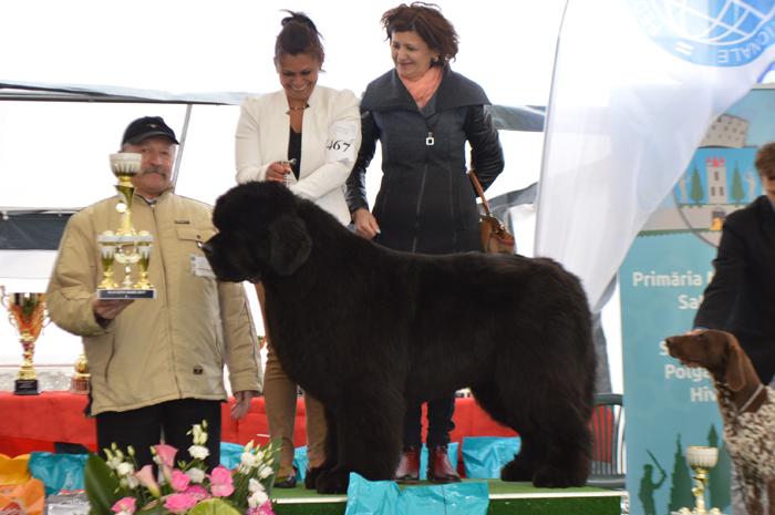 Vezi care este cel mai frumos câine din Satu Mare (Foto)