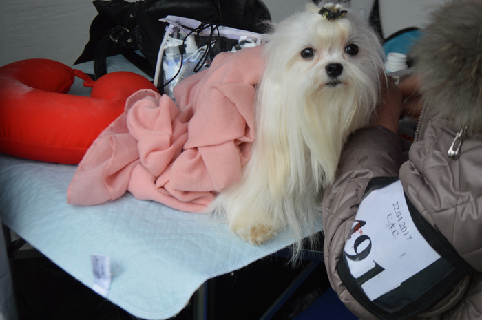 Dog Show la Satu Mare. Câini din 20 de țări, înscriși în competiție (Galerie foto&video)