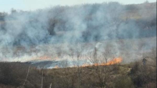 Incendiu lângă o pădure din județ. Vezi detalii