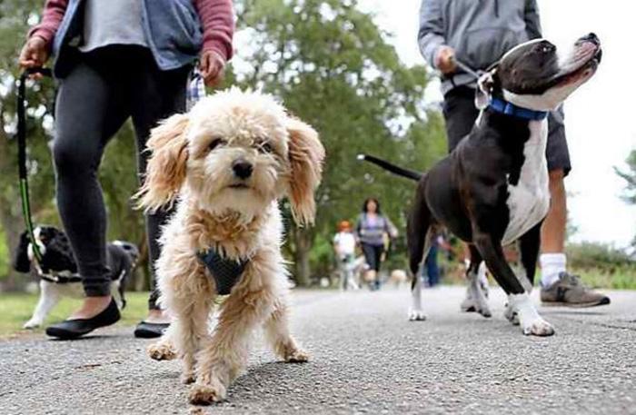 Zonă pentru plimbarea câinilor în Satu Mare. Unde ar putea fi amenajată (Foto)