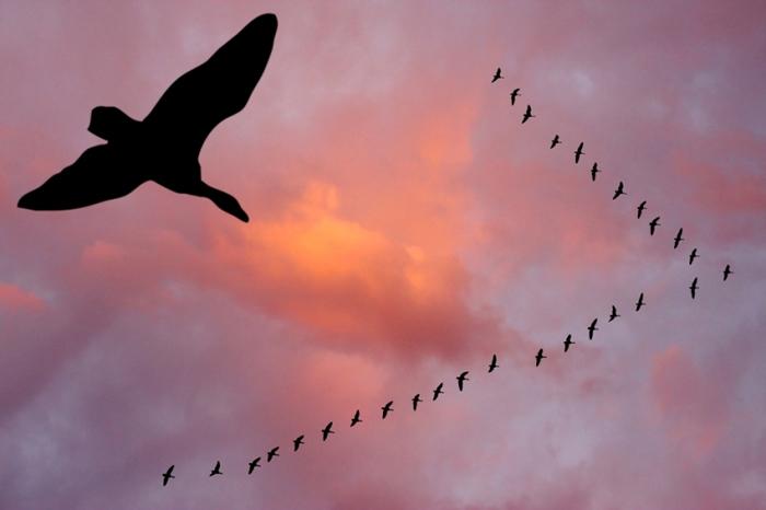 10 Mai – Ziua Mondială a păsărilor migratoare