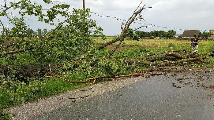 Copac prăbușit peste un drum județean. Vezi unde (foto)