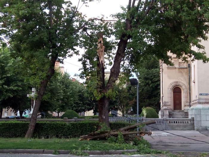 Furtuna a făcut ravagii în municipiul Satu Mare (Foto)
