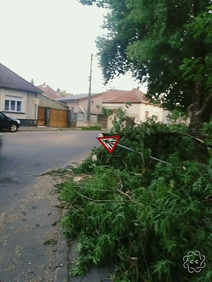 Copacii doborâți de furtună, lăsați de izbeliște în municipiu (foto)