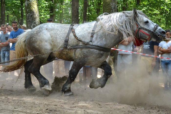 Concursul cailor putere la Valea Măriei. Vezi câștigătorii competiției (Galerie foto)