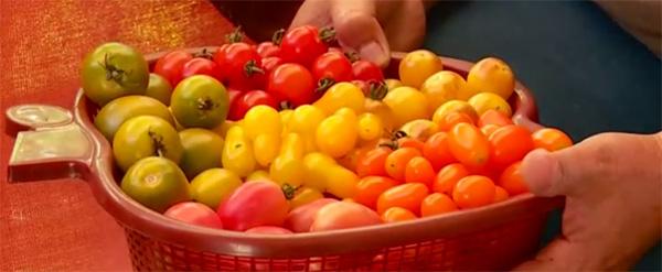 O familie din Satu Mare cultivă sute de soiuri de legume din toată lumea
