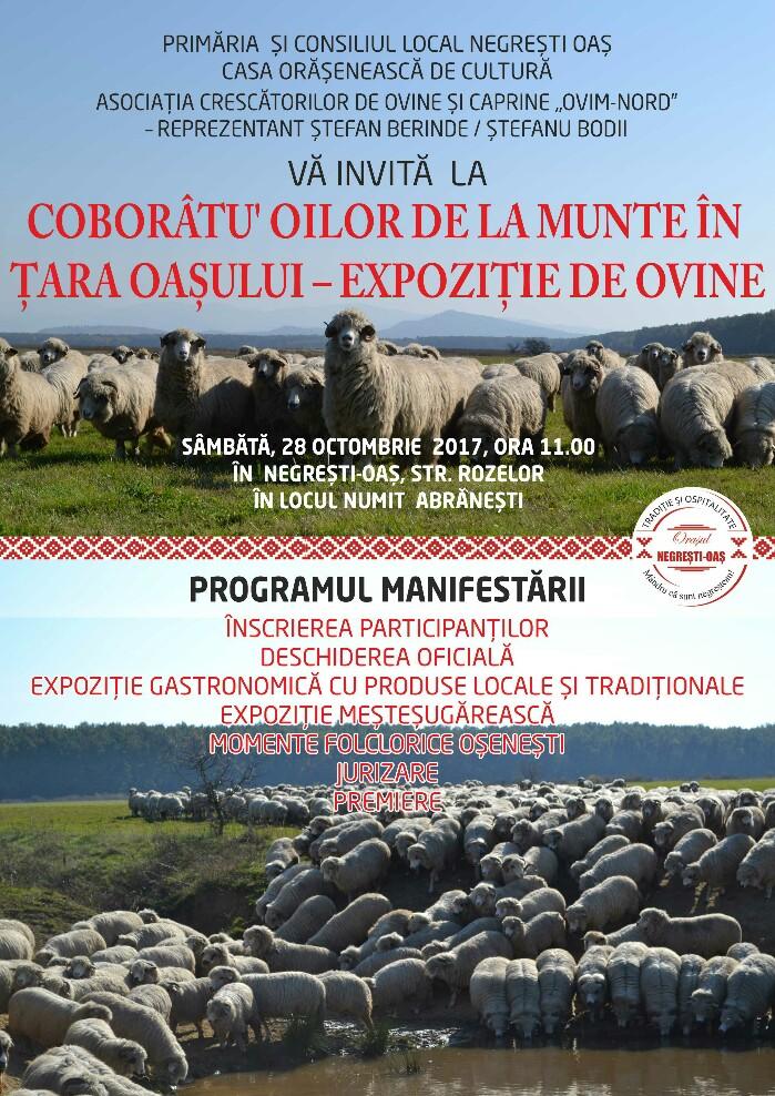 Coborâtu' oilor de la munte în Țara Oașului – expoziție de ovine