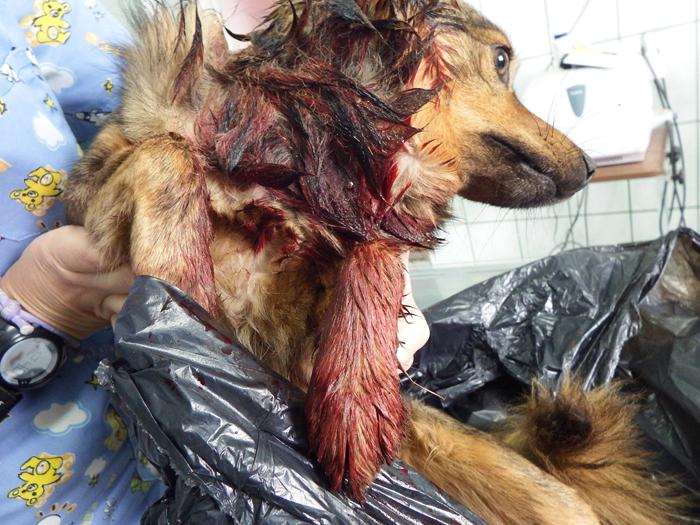 Bestie cu chip de om ! Un fost polițist a tăiat gâtul unui cățeluș (Foto)