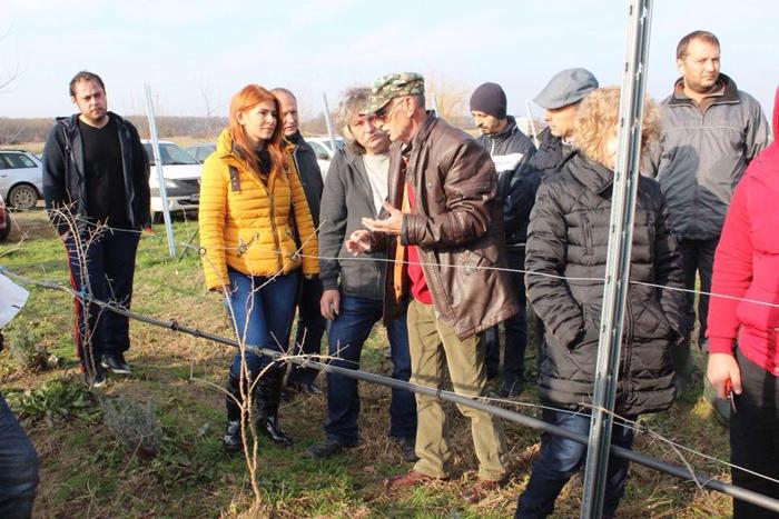 Deputatul Ioana Bran, la întâlnirea producătorilor de goji din România. Satu Mare, lider european (Foto)