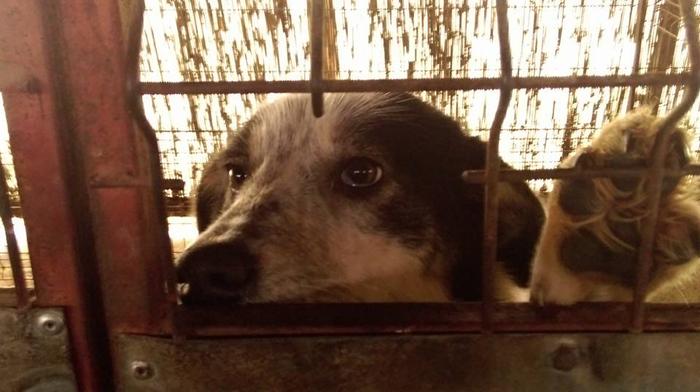 Acuzații grave ! Peste 1.000 de câini uciști lângă Satu Mare