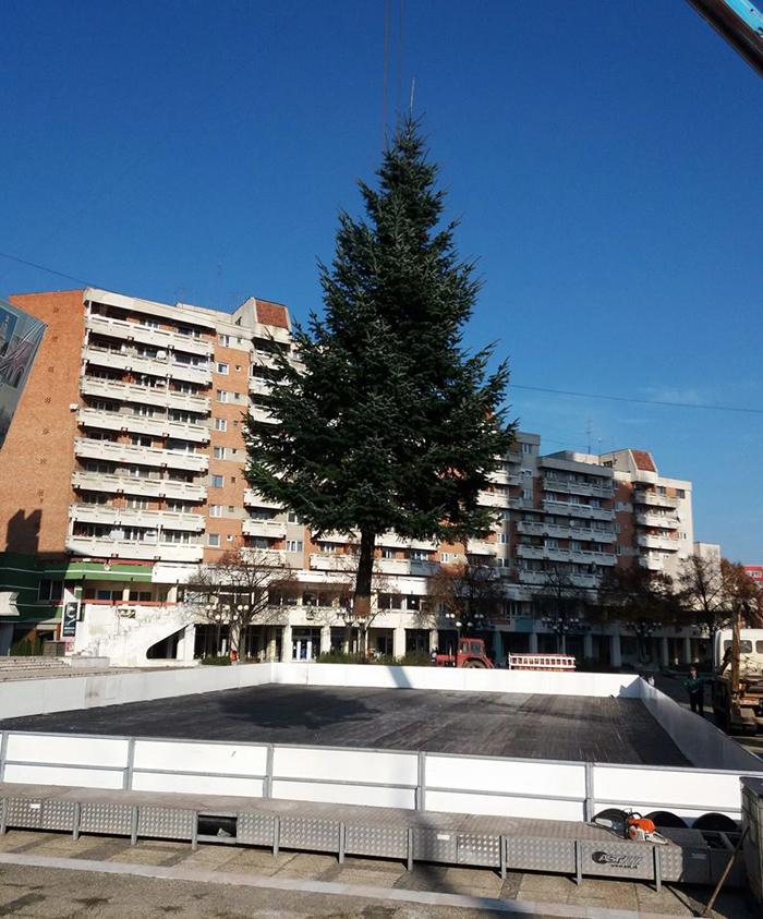 Încă un brad de Crăciun în centrul municipiului. Vezi unde