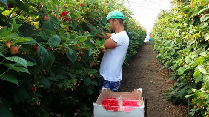 Locuri de muncă în Portugalia. Salariile pot ajunge la 1.000 de euro
