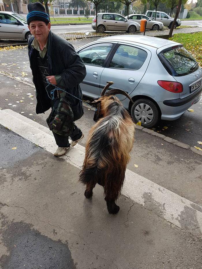A ieșit cu țapul în oraș (Foto)