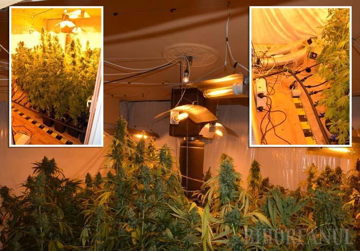 Captură de droguri ! Prins cu zeci de kilograme de cannabis și hașiș