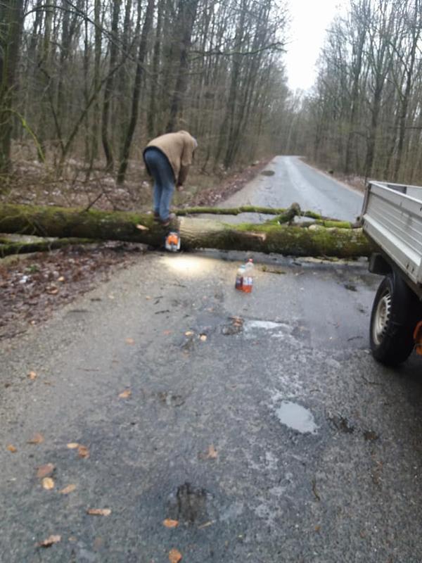 Furtuna a făcut ravagii în județ. Copaci smulși de vânt și un drum blocat (Foto)