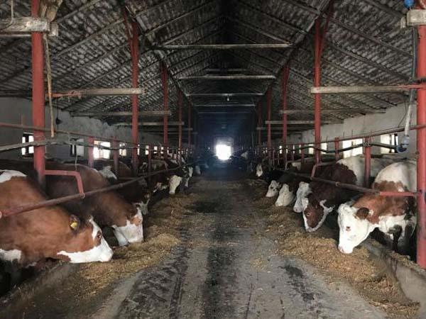 CAP în comunism, societate agricolă profitabilă în capitalism