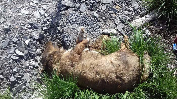 Cadavre de câini aruncate în câmp (Foto)