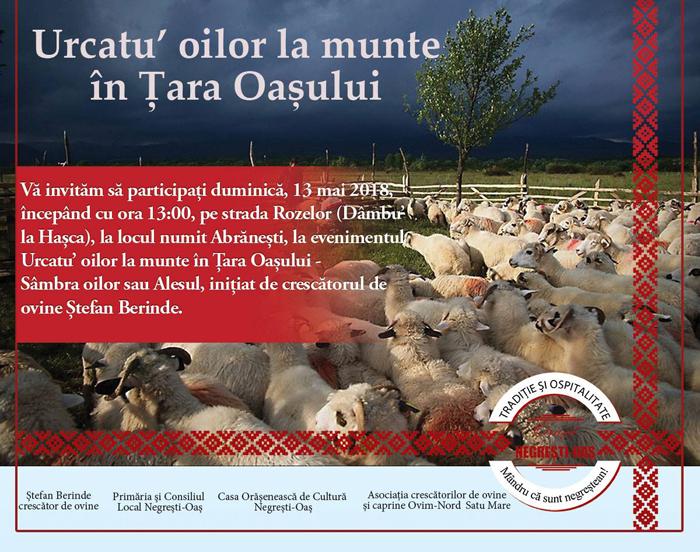Urcatu' oilor la munte în Țara Oașului