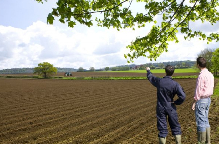 Aproape 230.000 de hectare de teren agricol, subvenționate de APIA