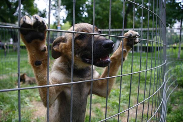 Prevederi legale noi în domeniul protectiei animalelor