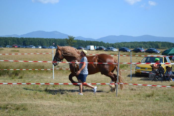 Concurs inedit la Valea Mariei. Care este cel mai frumos cal (Foto)