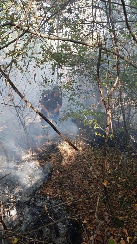 Arde padurea ! Pompierii intervin (Foto)