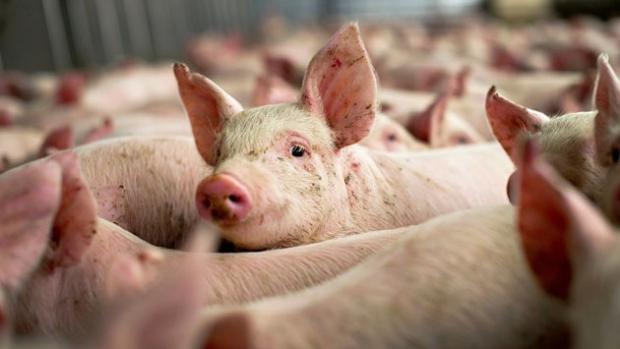 Maxim 2 sau 5 porci într-o gospodărie de anul viitor?